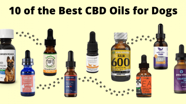 https://420.net/wp-content/uploads/2020/10/best-cbd-oil-for-dogs-640x360.png